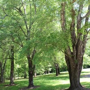 view thru green trees.JPG
