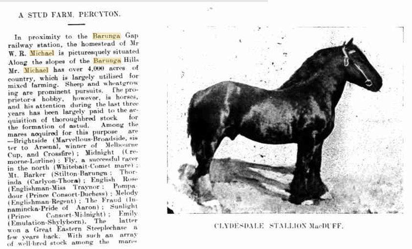Michael Stud Clydesdale 1905.jpg