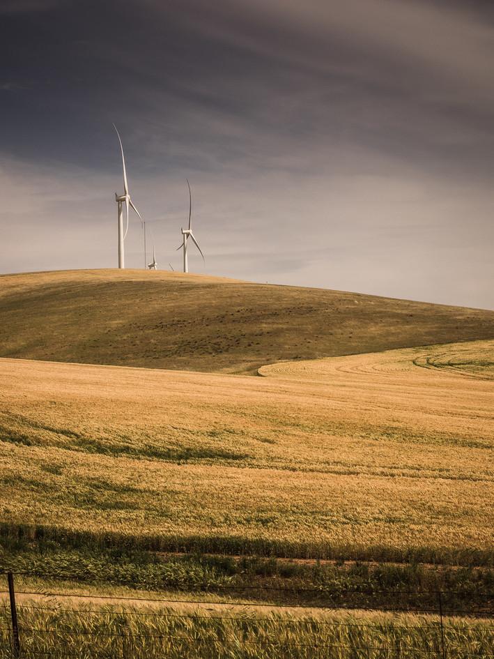 bill doyleFollow towards calvary clements gap wind farm and a field of oats, south australia
