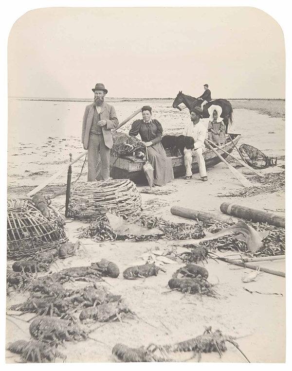 Spoils of the Ocean 1898 Pelican Point.j