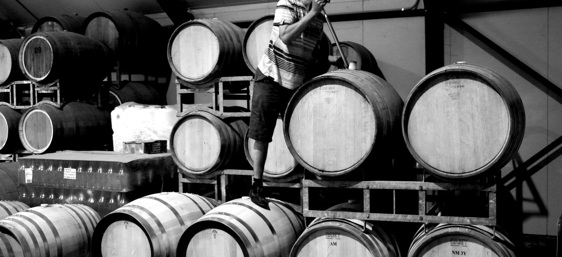 Wilson Vineyard Barrels