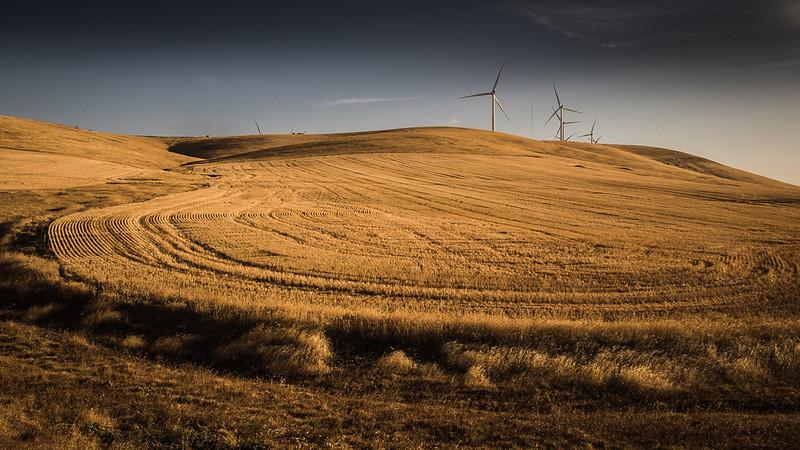 Wind power turbines above harvested paddocks