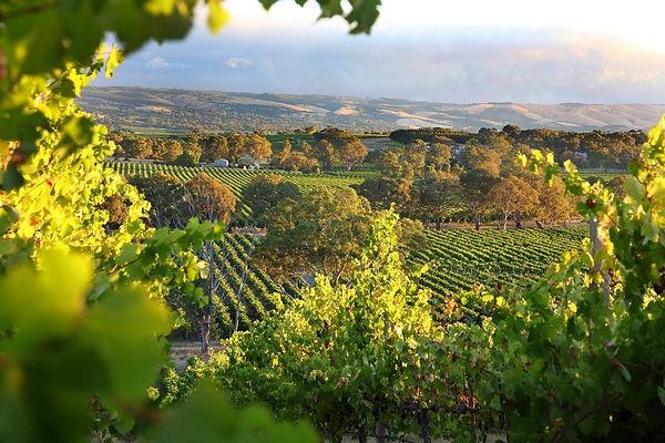 Vineyards-shutterstoc-1440x960.jpg