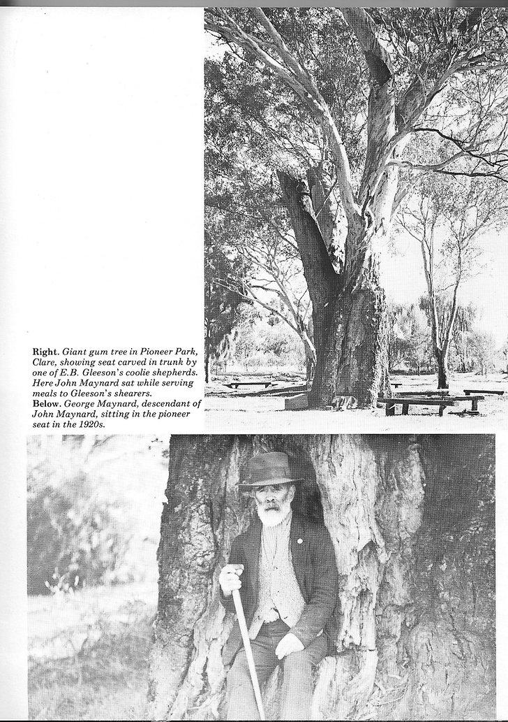Old gum tree in Pioneer Park Clare SA.jp