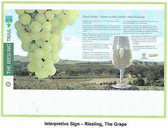 Riesling Interpretive Sign - the Grape.png