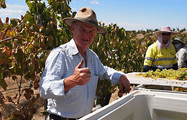 Jim Barry in the vineyard