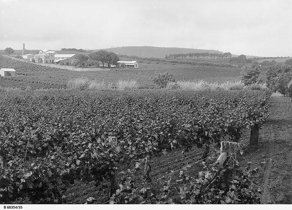 Springvale (Quelltaler) Vineyards and Winery