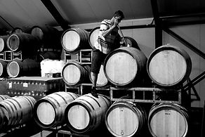 Wilson Vineyard Barrels.jpg