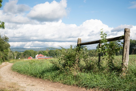Hampshire College farm