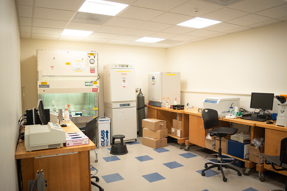 Inside the Hampshire College's Cole Science Center lab where tissue culture is conducted