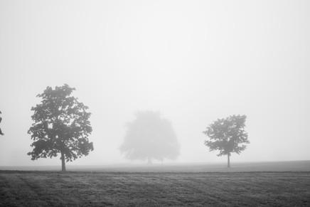 Trees in Fog (Hampshire College)