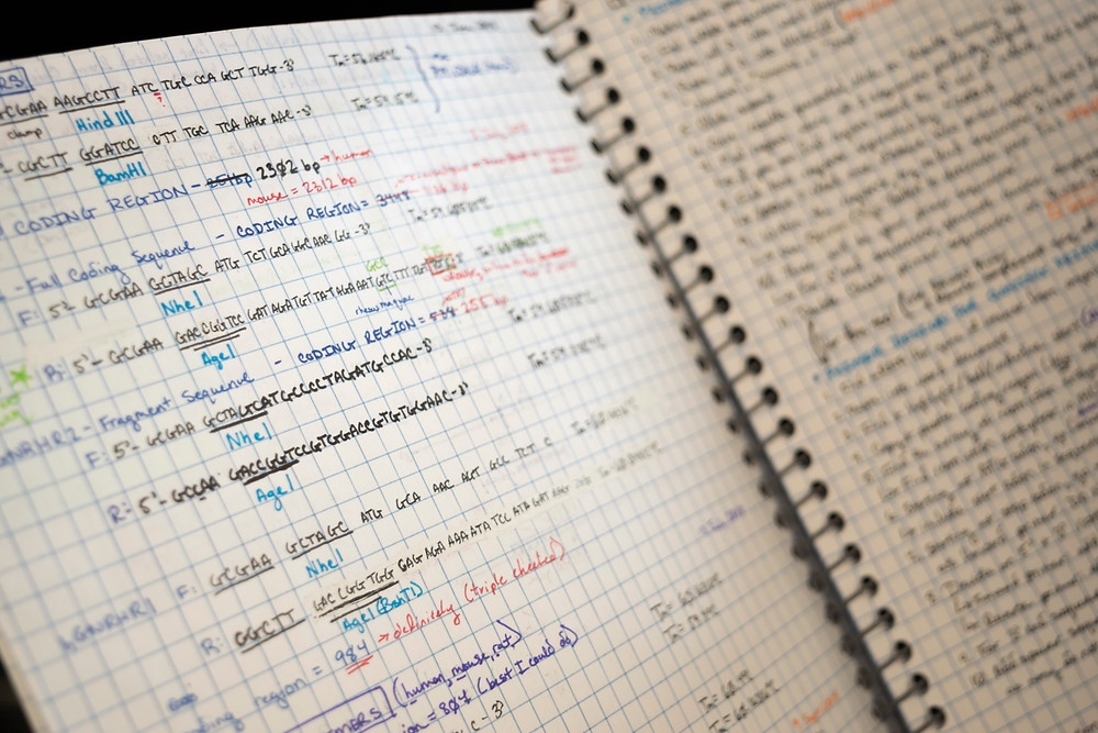 Scientific notes of a Hampshire College student's final year project