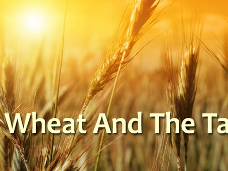 Our Hope Is In the Harvest!