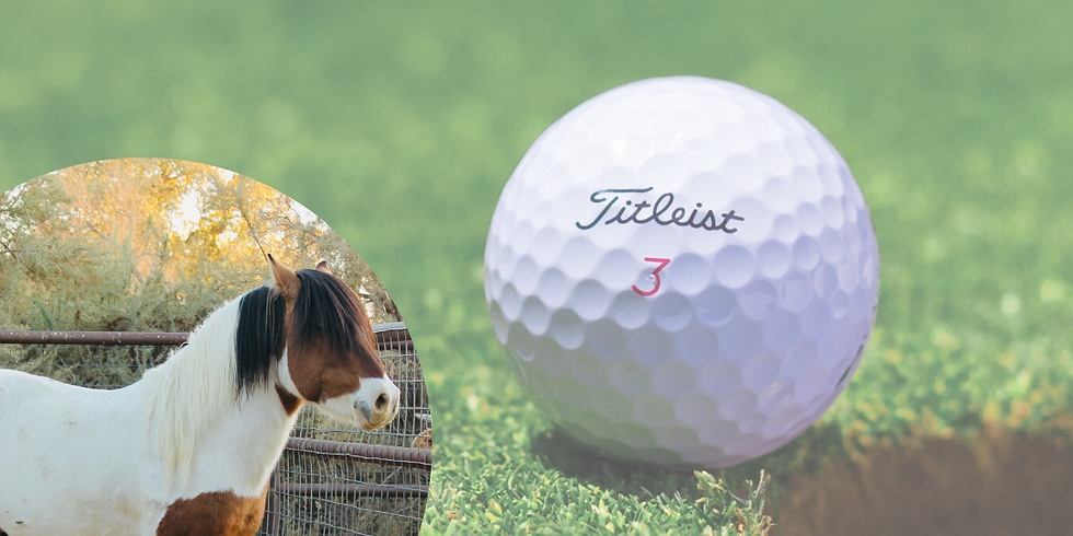 Golf Rounds for Rescue Horses