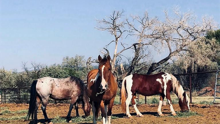 Tamaya Horseshoes & Heels Gala by Chalmers Ford