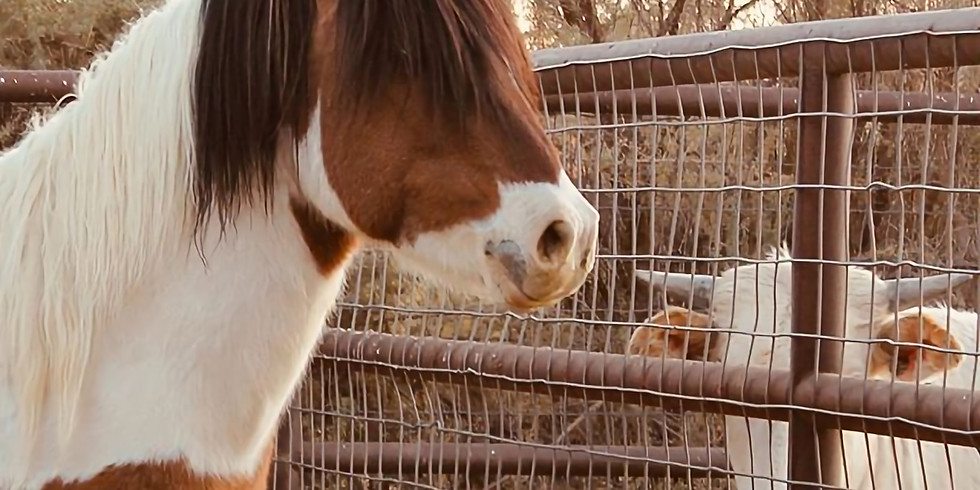 Help a Horse Auction