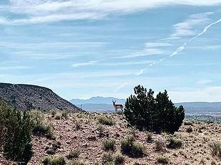 Santa Ana Pueblo's spectacular nature!.j