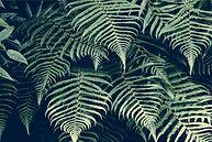 natural plant fibres