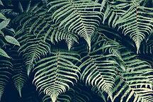 Naturopathe en visio-conférence