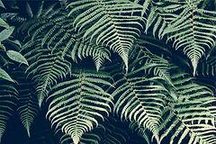 fougere, plante foret basque, nature jardin paysagiste