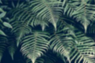 Consultoria Ambiental e Florestal