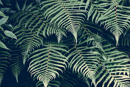 Produtos Ecológicos, Vida sustentável, Biológico, eco-friendly, Desperdício Zero, loja ecológica