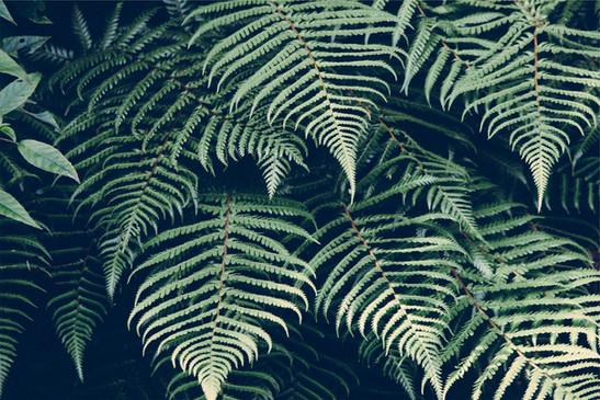 vihreät lehdet sademetsä