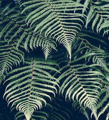 tropische Pflanze