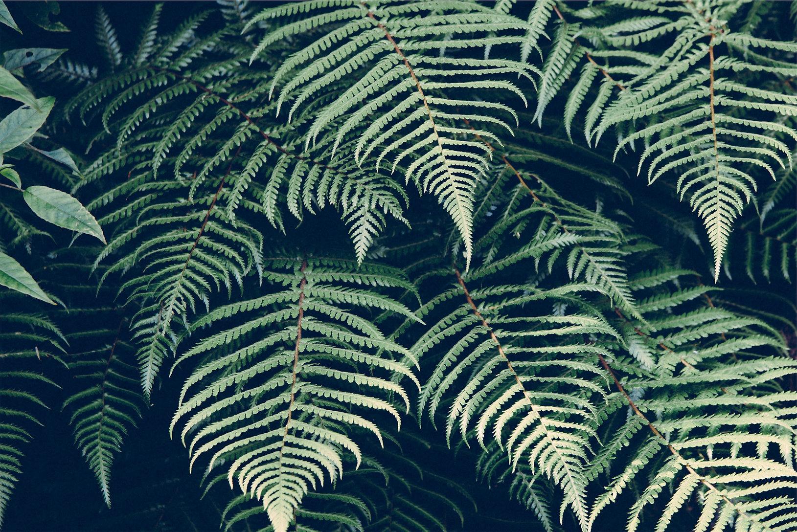 tropisk växt