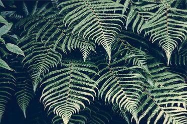 Tropisk Plant