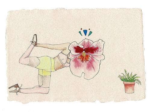 Flowerhead yogi, 2