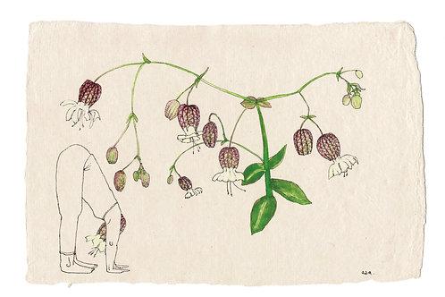 Flowerhead yogi, 3