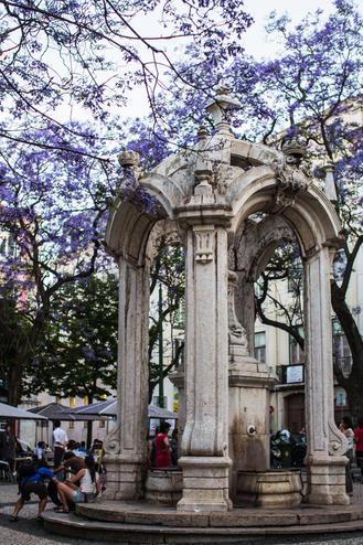 Jacaranda tree in Lisbon