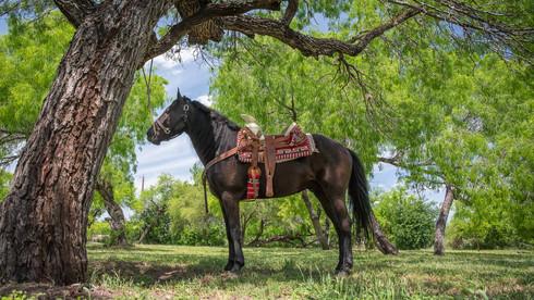 Auf der Ranch