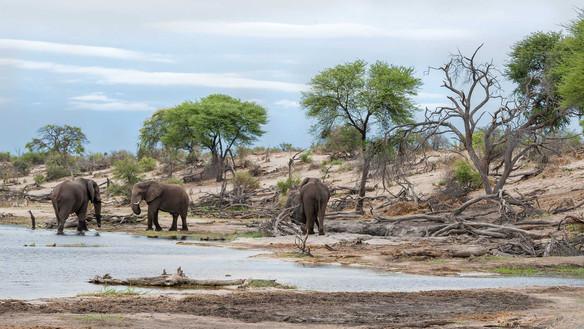 Elefanten am Boteti