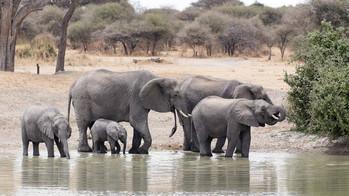 Elefanten an einem Wasserloch im Tarangire-NP