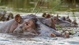 Im Okawango