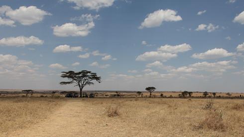 In der Serengeti