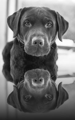 Balou im Spiegel