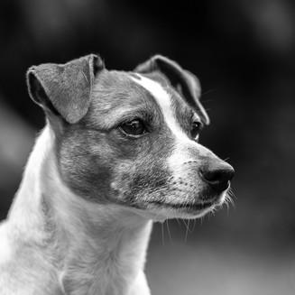 Hunde-12.jpg