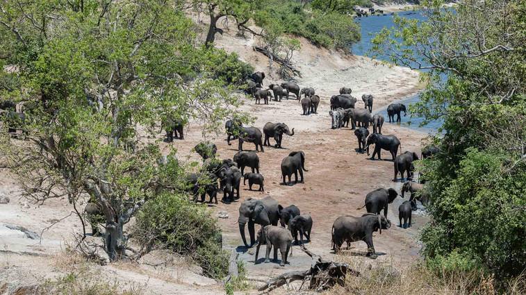 Elefanten am Chobe-River