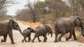 Elefantenwalk
