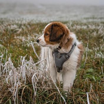 Shanti entdeckt den Winter