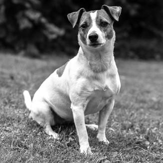 Hunde-13.jpg