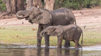 Am Okawango