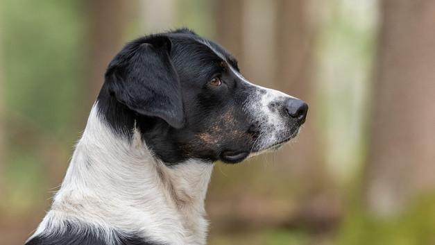 Hunde-14.jpg