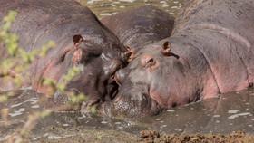Im Hippo-Pool