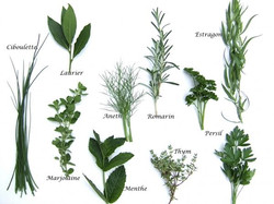 plantes aroma