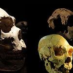 museo-evolucin-humana-burgos-29-728 edit