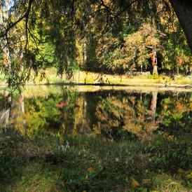 Early Autumn Pond